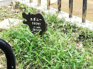 コビトカバ:エボニーちゃんの看板
