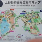 上野動物園のコビトカバ|ショウヘイ君おっとりしてるエボニーちゃん!?に会ってきた