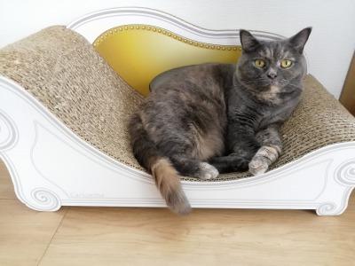 カリカリーナ:寝る時以外も猫のソファとして愛用
