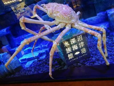 1階フードコート内に沼津港深海水族館のタカアシガニの画像